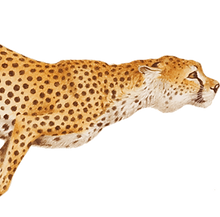 6-2-cheetah-transparent.png
