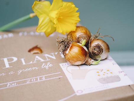 Plantar en tu casa es fácil: La increíble floración de los bulbos