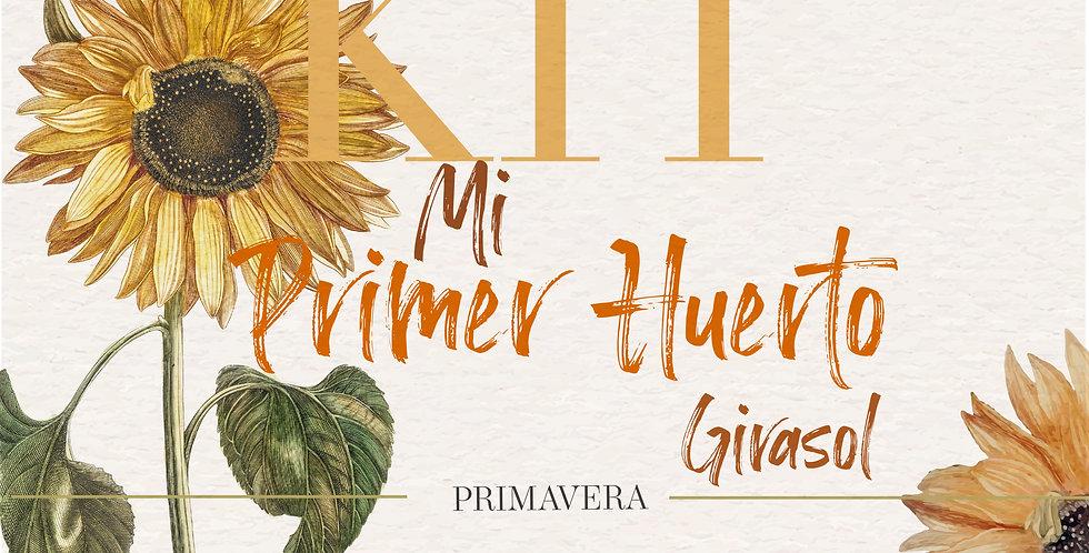MI PRIMER HUERTO DE GIRASOL