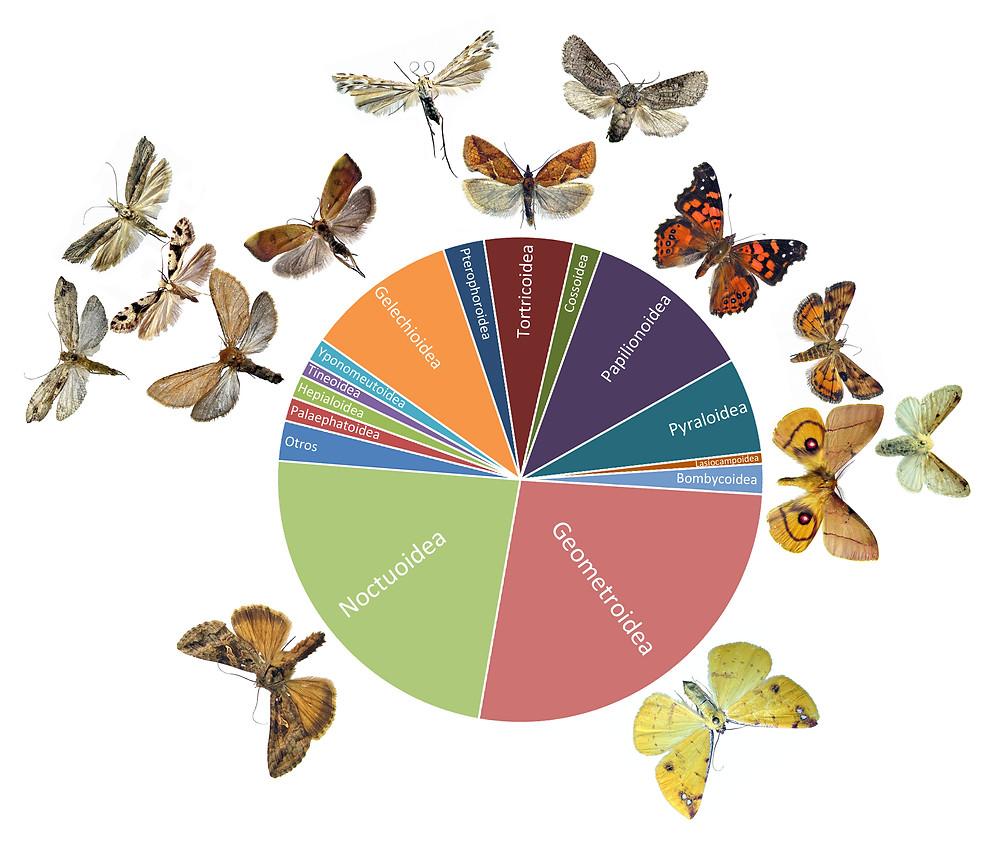 Diversidad relativa de los principales grupos de lepidópteros presentes en el país.