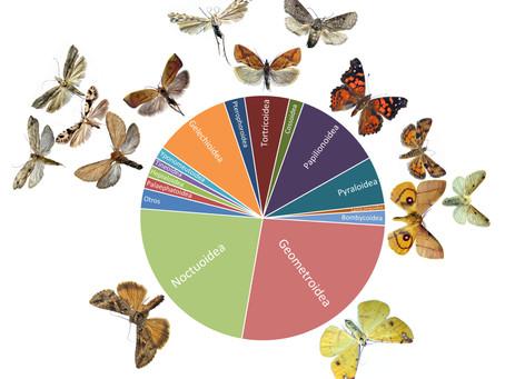 ¿Por qué estudiar a los lepidópteros?