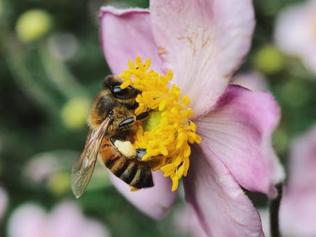 Londres solidariza con las abejas
