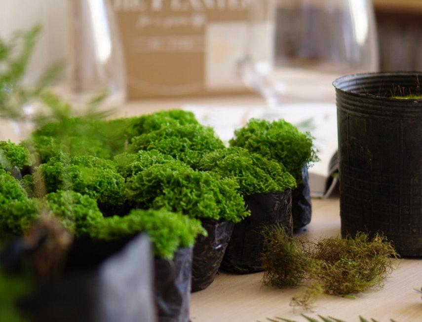 WORKSHOP Diseño de Terrazas y Balcones o un pequeño jardín con plantas de Sombra