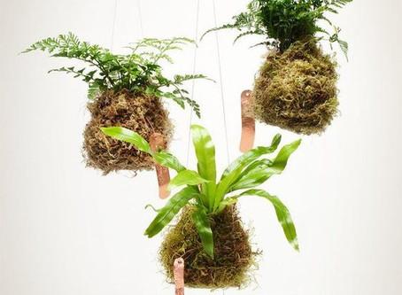 Jardines en el Aire: PRONTO nuevo Kit Kokedama