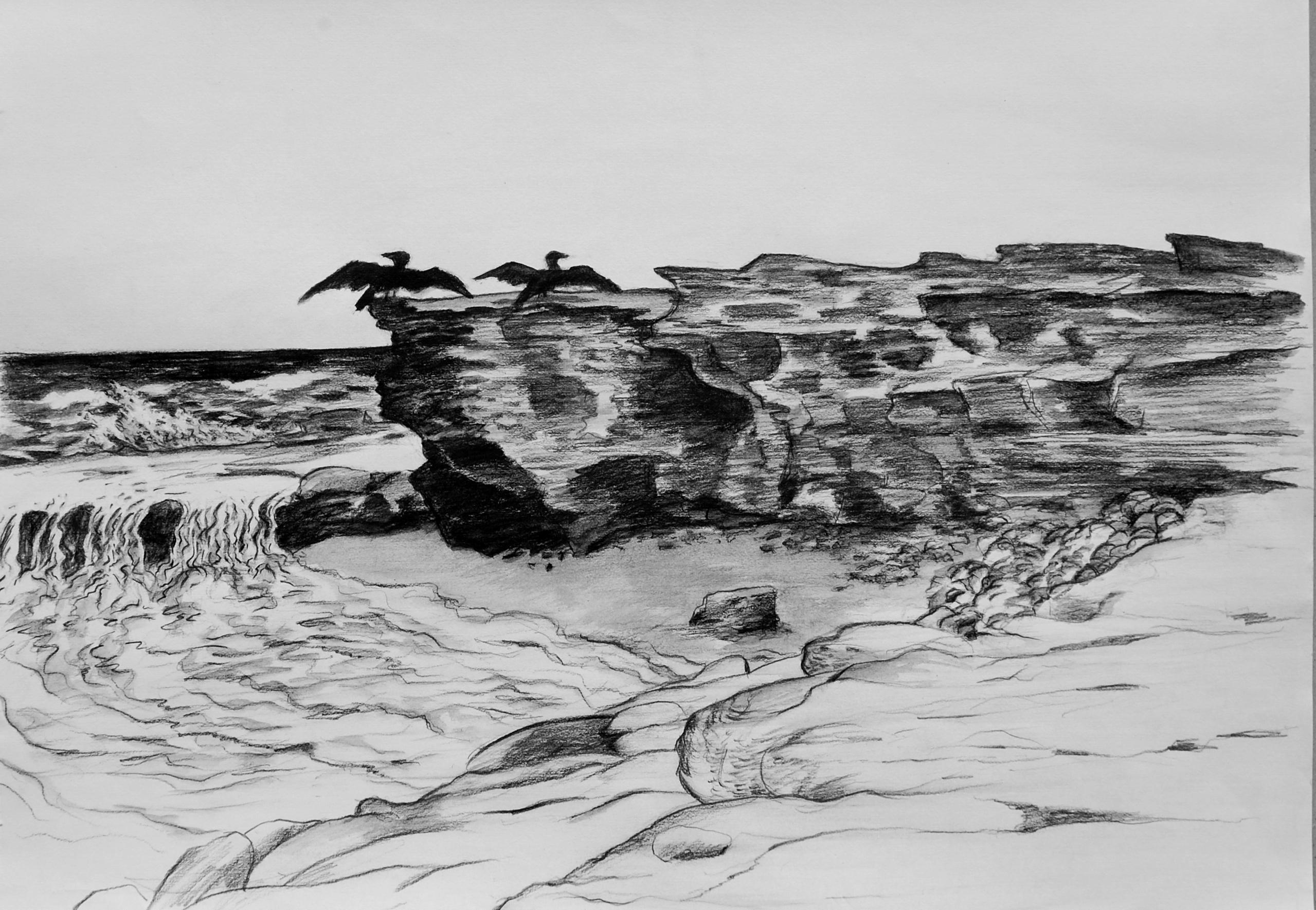Cormorants at Shelly
