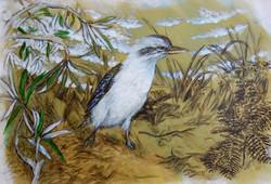 Era Kookaburra