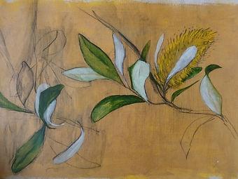 Banksia flower.jpg