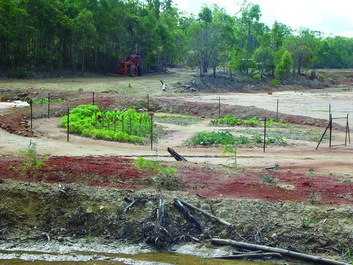 Vege garden, June 2003,