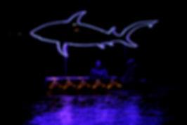 Blue bull shark s_f.jpg