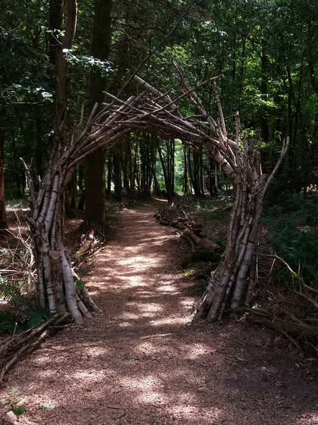 Walk Wood | National Trust Sheffield Park | East Sussex 2017