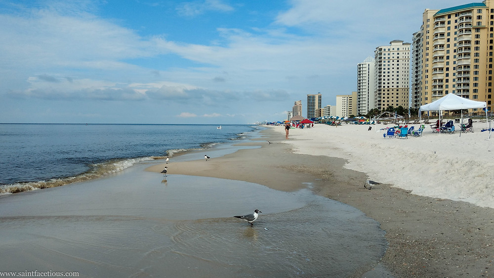 Seagull on the beach. For a beach lover, there are few places better in the world than Florida and South Alabama. Read more about where to go on Perdido Key.