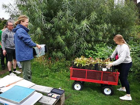 trolley harvest.jpg