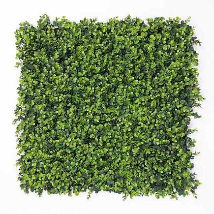 Calico Greens Santa Barbara Front.jpg