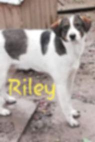 Riley.jpg