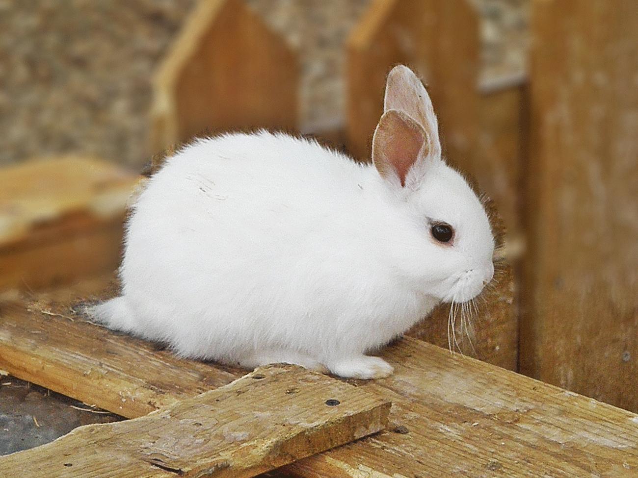 토끼_수정01