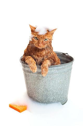 кот-получая-ванну-26323221.jpg