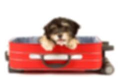 Собака, доставка, перевозка, зоотакси, стрижка собак и кошек