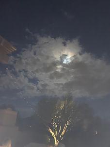 Moon tree.jpg
