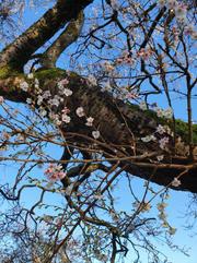 Autumn blossom... - Carrie Ellwood.jpg
