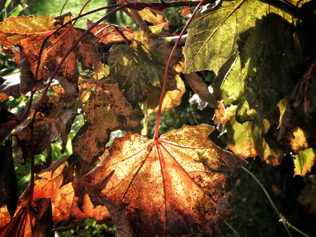 5 Ways to Achieve Awesome Autumn Photos