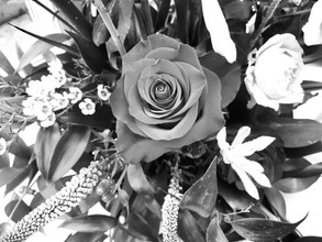 b and w flowers Louise Robinson.jpg