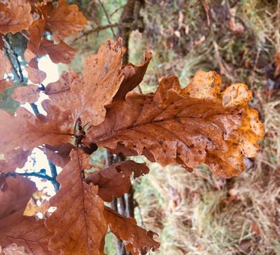 Autumn - Sue Atkinson.jpg