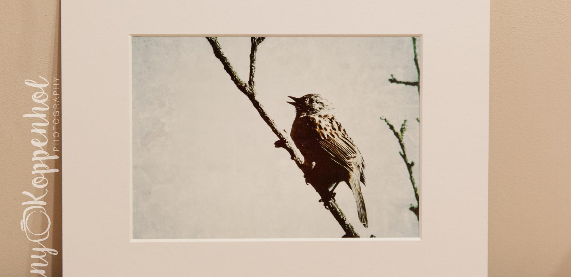 Songbird (Colour)