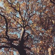 Autumn - Eliza Byrne .jpg