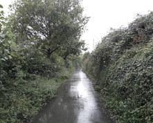 In The Rain - Joanna Cameron.jpeg