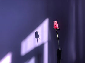 Shadow of a Rose - Jean Robinson.jpeg