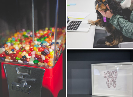 Dogs, Disney & Jelly Beans