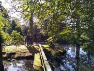 On an Island at Hornby Castle - Joanna C