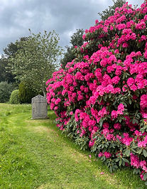 Rhododendrom julie.JPG