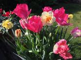 Mum's Flowers - Rebecca (7).JPG