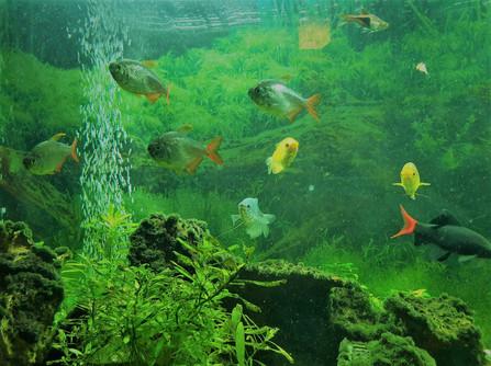Fish - Hazel Hardie.jpg
