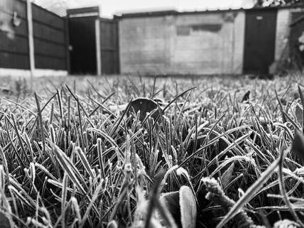 Friday - Frost-day (B&W) .jpg