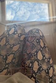 Reflections - Zahra Moreea.jpeg