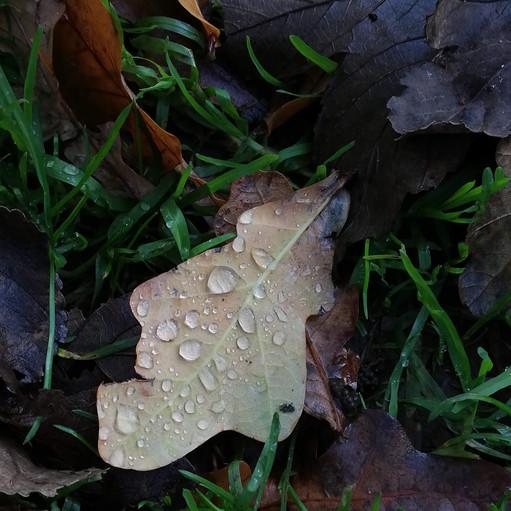Autumn raindrops - Tamsin Coxhill.jpg