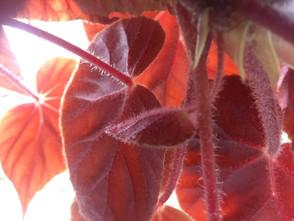 mum's plant Louise Robinson (2).jpg
