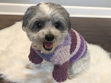 Textured Dog Sweater (with sleeves!)