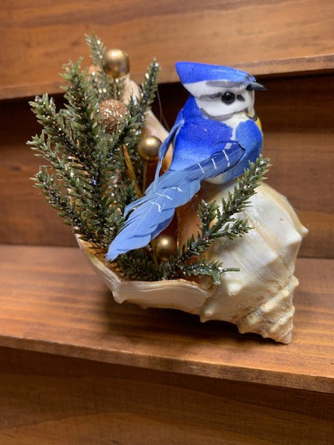 Bluejay on Conch Shelf Art