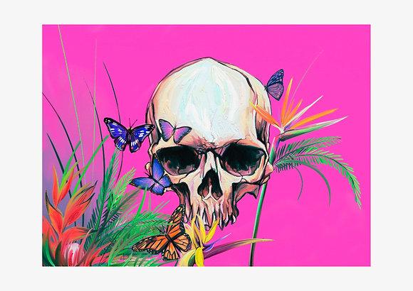 Pink Skull Fine Art Print