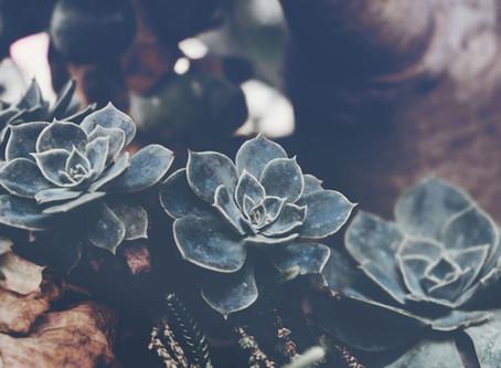 SOINS POUR LES PLANTES SUCCULENTES