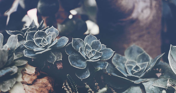 Succulent Peace Charley Roux Acupuncture Oxford