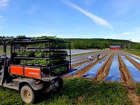 strawberry-hill-farm-c_edited.jpg