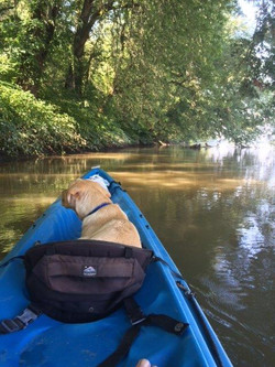 Kayak dog!