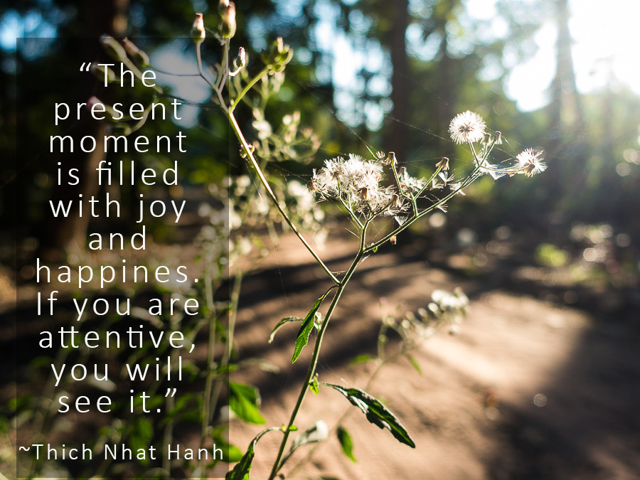 """close up image of dandelion type plant with sun in background. Quote on photo is """"The present moment is filled with joy and happiness.  If you are attentive, you will see it."""". by Thich Nhat Hanh"""