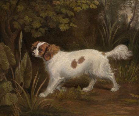 A Cavalier King Charles Spaniel