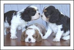"""Puppies"""