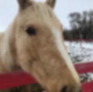 horse - lily.JPG